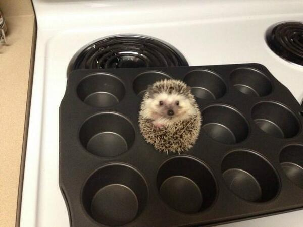 For anyone who is feeling a bit sad, here's a hedgehog in a baking tray. http://t.co/giCcOLxR4R
