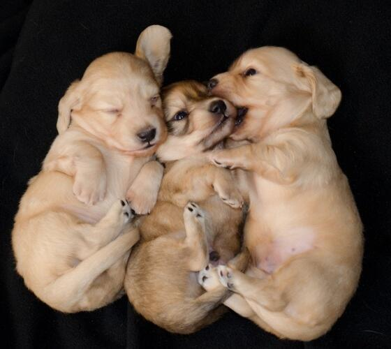 Cuddle buds http://t.co/oYkqGT1iVO