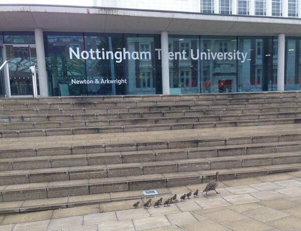 Not a sight you see every day... 11 ducklings and their Mother decided to stop by our Newton building! http://t.co/DY1oGx4h4v