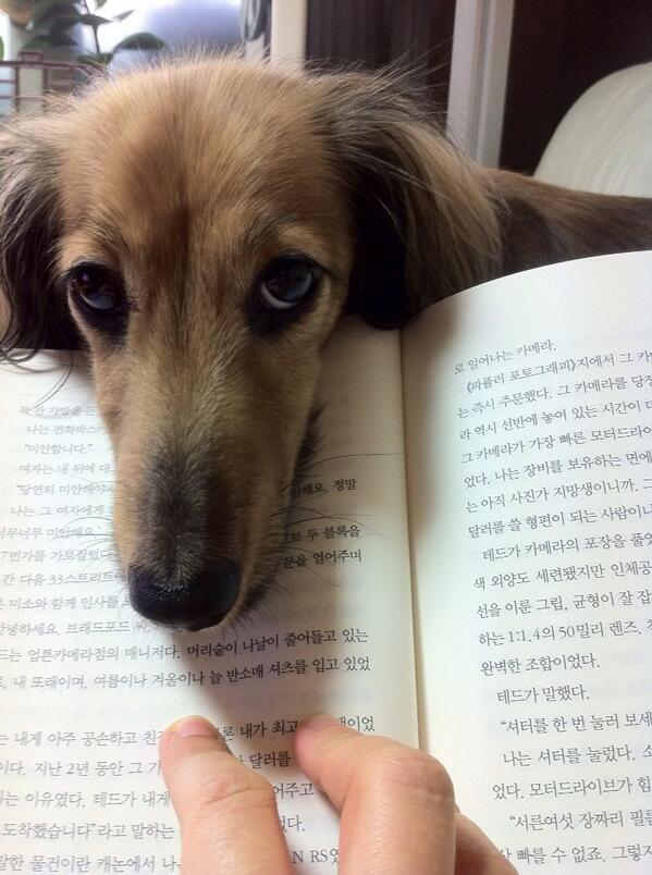 책 그만 보구 나랑 놀아줘~~~ http://t.co/xhbtOJcn9s