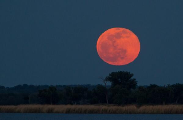 And the moon filled the sky. Enjoy this view from Lake Somerville State Park #fullmoon http://t.co/WXnVwQ007a