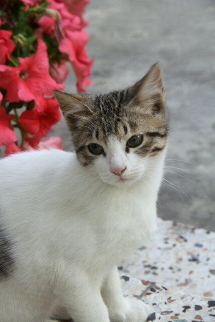If you see this cat around DAMAC towers across Dubai Mall in DIFC please contact me. Please RT. He is missing. #Dubai http://t.co/kgPd3iMFpO