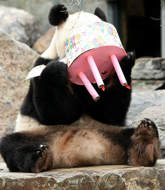 Happy birthday @formichetti!!! You're a great inspiration and you deserve all the best! #nicopanda #pandalove xx http://t.co/nPQDcis0RR