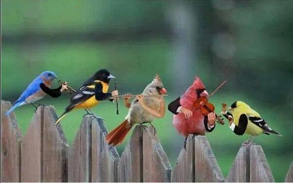 @preeti_simoes wat @KapilSharmaK9 meant-v @rajanskhurana:#Birds' chirping bonus 4 keepin water 4 em http://t.co/F20afvqDmE v @Things4Strings