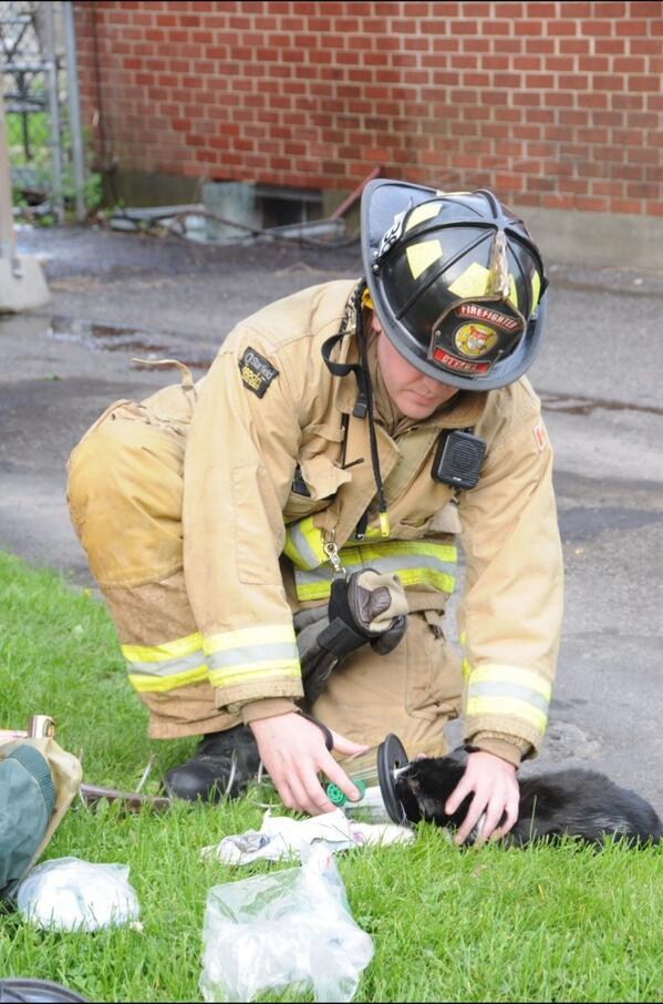 A firefighter gives oxygen to the cat after rescuing it from the smoke filled home. #ottnews http://t.co/1LG0F8ifVs