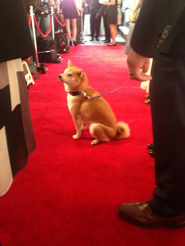 RT @mhattikudur: A little rough! @erincmccarthy and I had to follow @DogeTheDog on the red carpet #webbys http://t.co/AbHWewwEZX