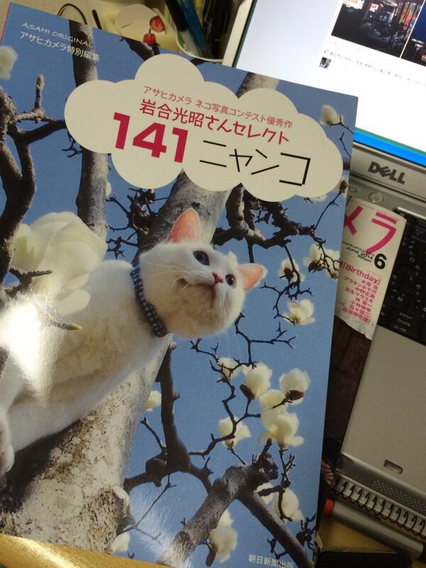 「アサヒカメラ特別編集141ニャンコ」これはすごい。コンテストの写真だけで構成された画期的な雑誌ですね。広告も裏表紙だけであとは丸ごと一冊ネコ写真満載。雑誌と言うより写真集ですね。 http://t.co/FspTkzAVjU