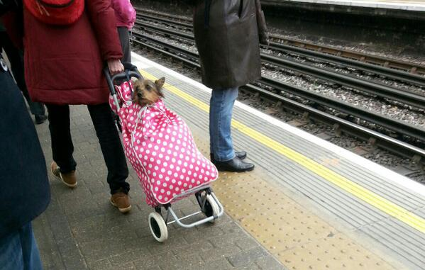 Dogs don't have to walk at Hammersmith Tube @dogsontrains http://t.co/FLPDZYZzVB