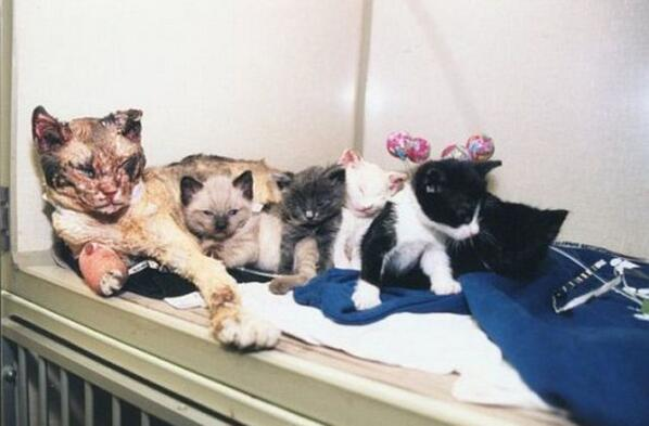 Mother cat walks through flames five times to rescue her kittens http://t.co/4H7ozOs5Wd