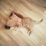 Kitten or baby horse? . http://t.co/S6pIsASpof