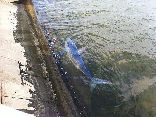 Hallazgo inédito; aparece tiburón azul en Campeche. http://t.co/VXLdFrQSFt | http://t.co/kTFrlnHrLA