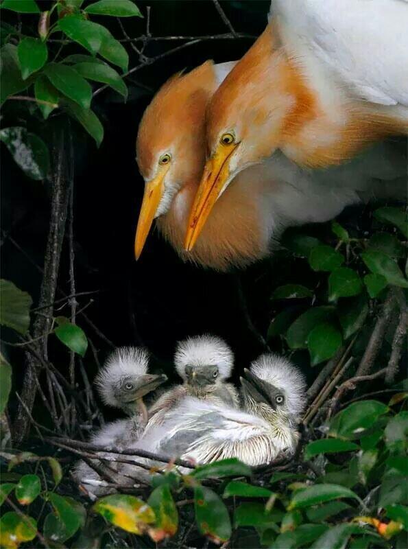 Hogar. Papa y mama http://t.co/5gBll3WCR9