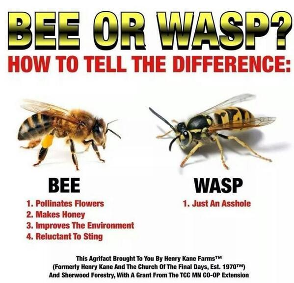 Bees. Now you know. http://t.co/PmZqlgqymO