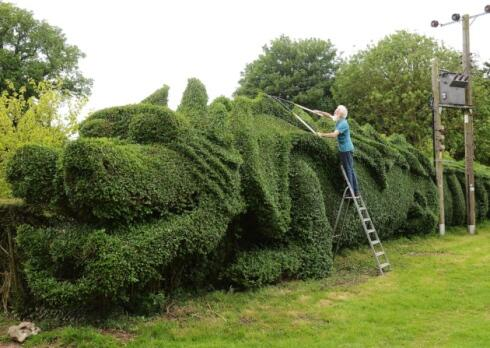 Photo gallery: Norfolk gardener carves his hedge into a giant dragon http://t.co/Timjz0lExb #edp24 http://t.co/tdUS9YyIyw