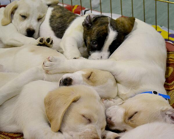 Come adopt these adorable #puppies. They're watching you! #adopt #shelter #adorable http://t.co/GvGVPNgqHi