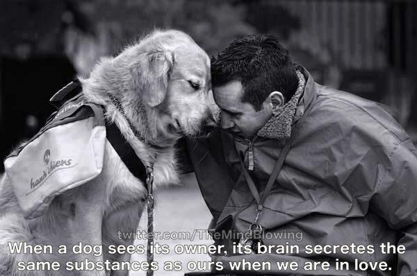When a dog sees its owner, its brain secretes the same substances as ours when we are in love: http://t.co/yVVLEBbOgb
