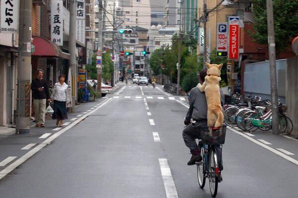 犬もさることながら、この車の少ない道路もすごいです (^o^) RT @hsieh45 @12_jena (;^0^;) http://t.co/fMzYPtJQ9B