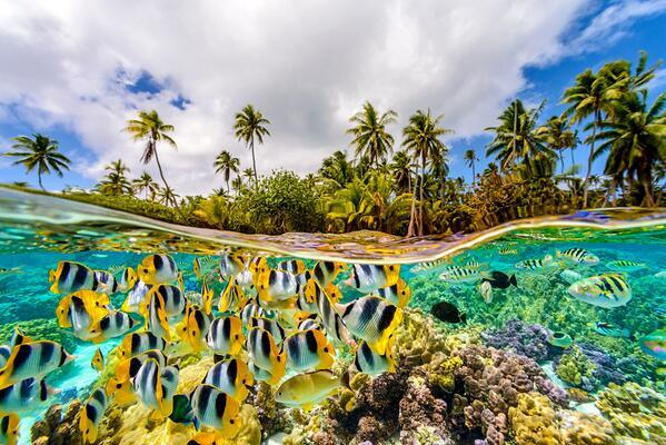 The underwater life in French Polynesia. Photo by Chris McLennan. http://t.co/HYSOAdkMkb
