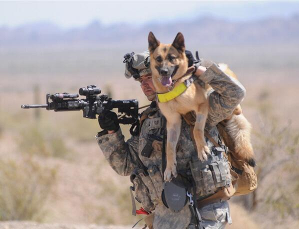 #MemorialDay2014 #SalutingWarDogs http://t.co/bZi8zNI29W