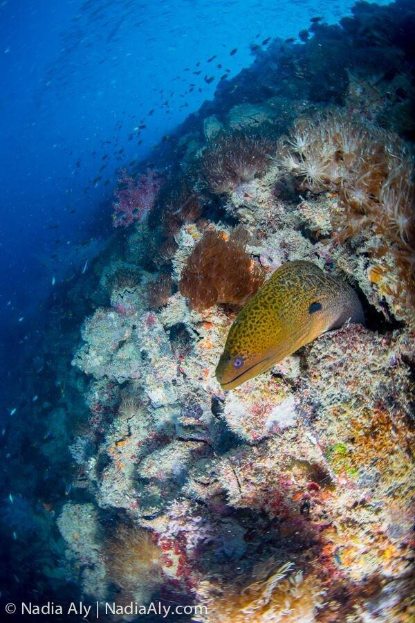 Amazing dive on the Yongala! The Great Barrier Reef is very impressive! #scuba #visitqueensland http://t.co/LVoNhJEu72