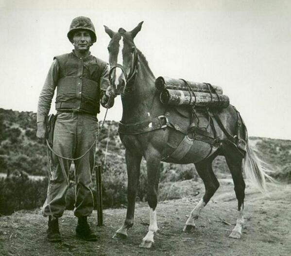Saluting Sergeant Reckless and Klinger for exemplary service in the US Armed Forces ~ http://t.co/qeAZsPeRpu http://t.co/TfSRh1Csx6