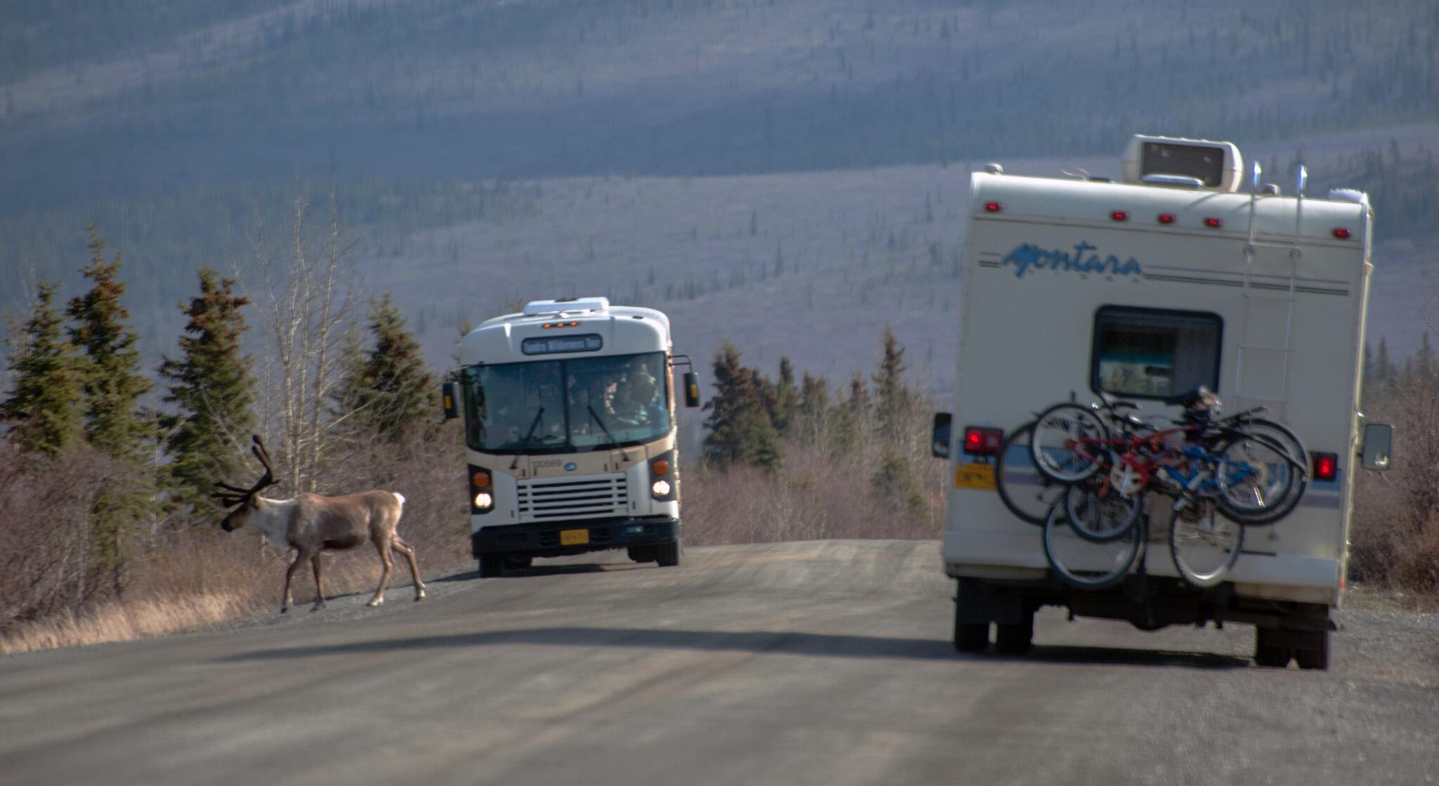 Memorial Day traffic on the Denali Park Road, just east of Teklanika River Campground. >je http://t.co/sIDye2e4W7