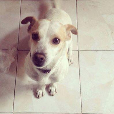 Este perrito poca madre necesita casa. Está chiquito y es buena onda. Detalles de adopción conmigo o @lalamagica RT http://t.co/I5X8QxN5D2