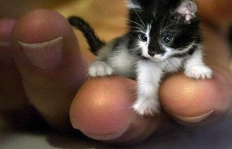 Самый маленький кот в мире http://t.co/HbpIrnSXAu