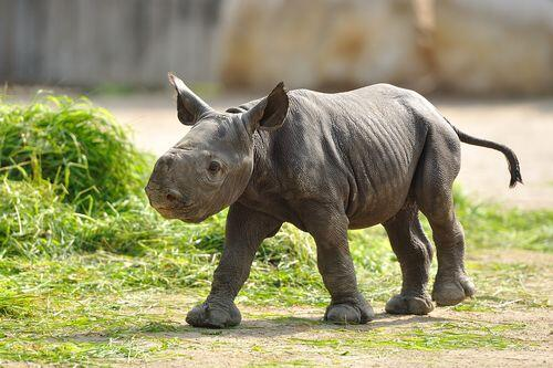 The world's greatest #rhino sanctuary is under threat from a new coal mine. We can save it: http://t.co/mDukgIuWKK http://t.co/rduoSfRosU