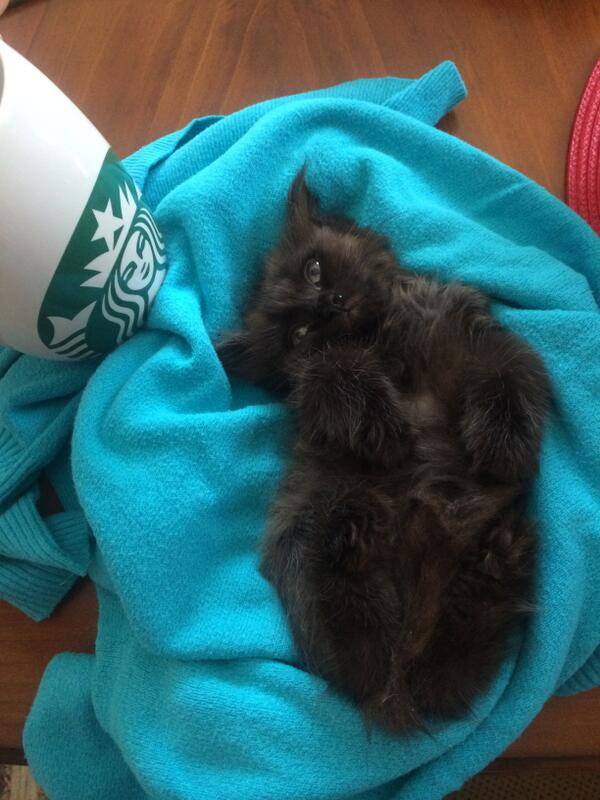 Someone dropped off this tiny kitty in my backyard.Can't keep him, anybody want to take him in? Very friendly/calm - http://t.co/nu80KXfCb3