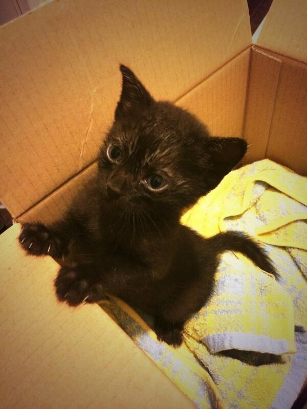 広島県広島市で保護しました。 広島もしくは東京で飼ってくださる方探してます>_< 東京の場合は6/23の受け渡しになります。 広島の場合は即日受け渡し可能です。 生後おそらく一ヶ月半くらいの黒猫のメスです。 病院には連れて行きます! http://t.co/NNAefb3elV