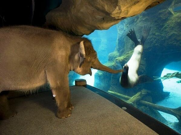 The animal handlers at the Oregon Zoo took Elephant around to meet other animals. The sea lions were her favorite: http://t.co/5Jy8ZzkH4s