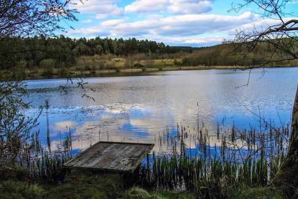 Northern arc, Cinderford, full of rare, protected species on PublicForestLand  #naturenot4sale http://t.co/Q8wQontdws http://t.co/scn5uOCv6e