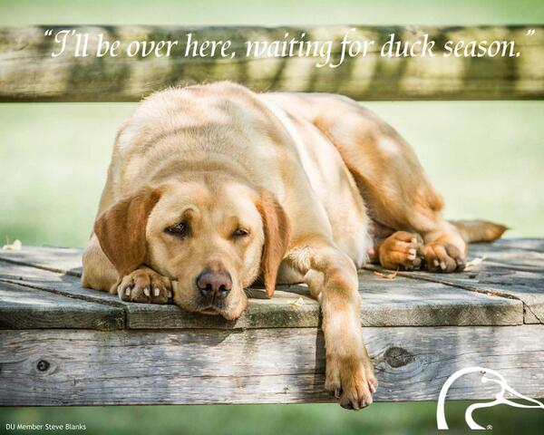 Feeling the same way? #retrievers #hunting #duckhunting http://t.co/j5MX4OKkn8