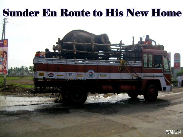 Thanks for helping Sunder. He is now en route to his new home. This hasn't been easy. Details: http://t.co/p4zv3UD5Pd http://t.co/zrXPMpbYQW
