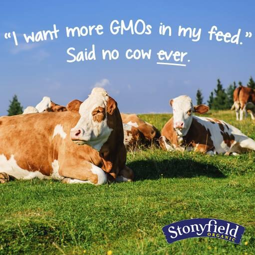 """""""I want more #GMOs in my feed"""" said no cow ever! #goorganic #labelGMOs http://t.co/F2IRVhm0XV"""