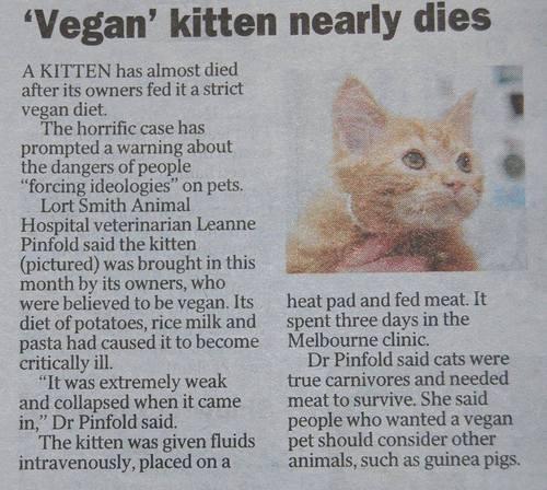 ヴィーガンの飼い主が飼い猫にまでヴェジ食を与えて、子猫の殆どが死んだとかナントカ。胸くそ悪い記事。