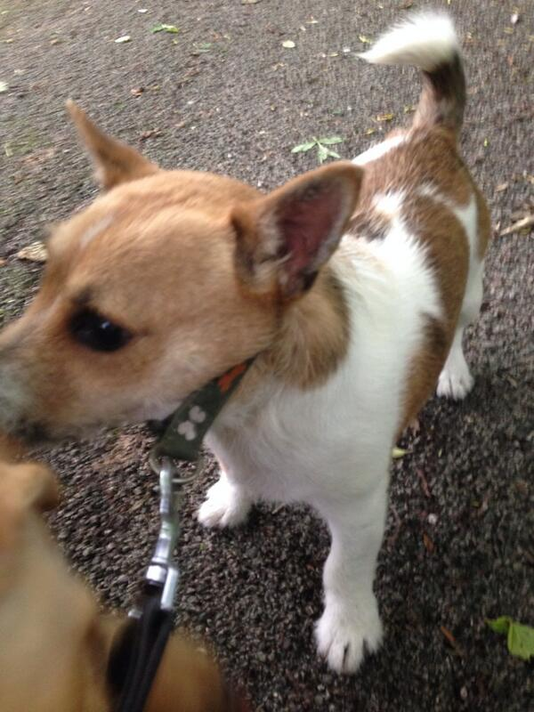 PLEASE HELP I've just found this dog wandering and I have no idea where he lives. Ribbleton area Preston. http://t.co/8K749yAxDG