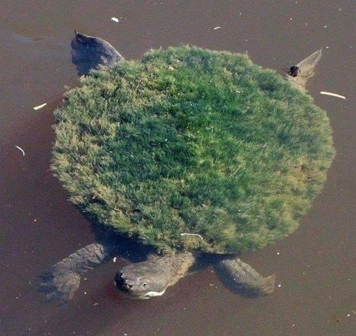 The Turtle who grew his own garden: http://t.co/5iVZzC1Uk2
