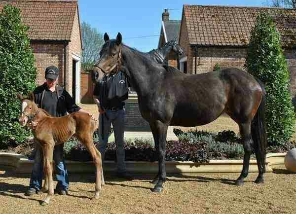 Australia as a foal. http://t.co/8CMWgPLL5H