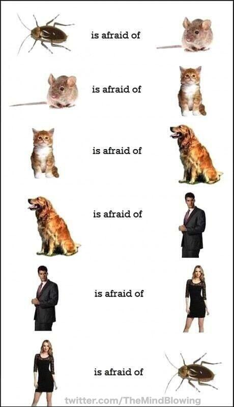 The circle of fear http://t.co/mbtwrUBWeS