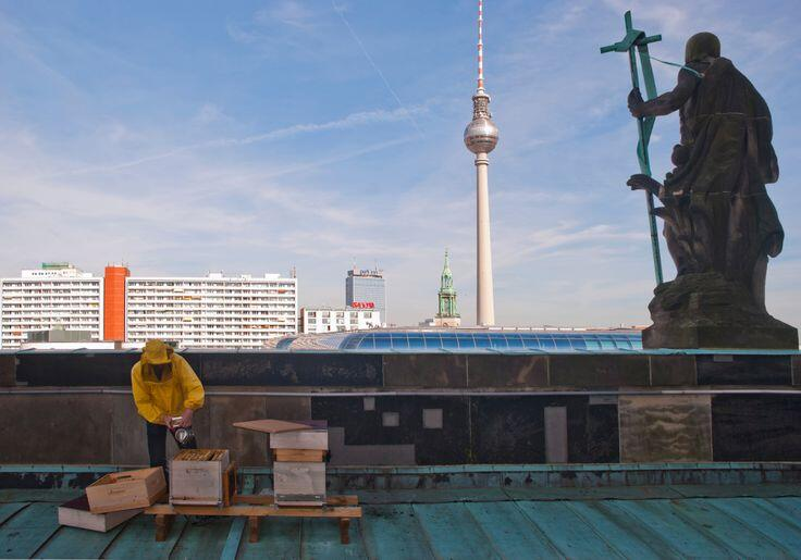 Berlin is saving #Bees by using #rooftops Keep the #bee alive! share if you care @Bijenlint @SonnyBeez @HermansHoning http://t.co/CZfOoWTuD7