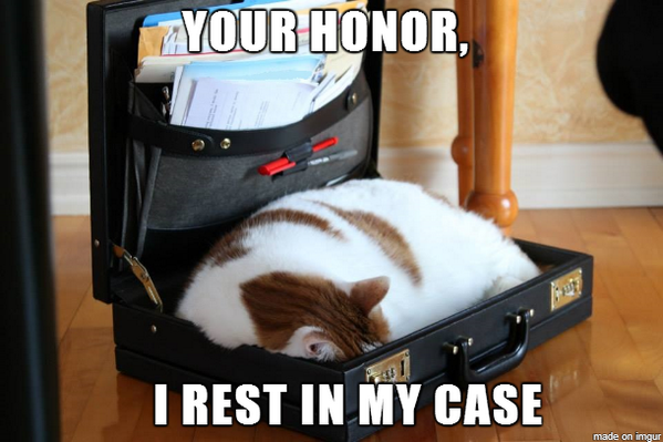 Lawyer + Cat = Internet win. Here's the pic that's going viral http://t.co/NmNLzRGhNy