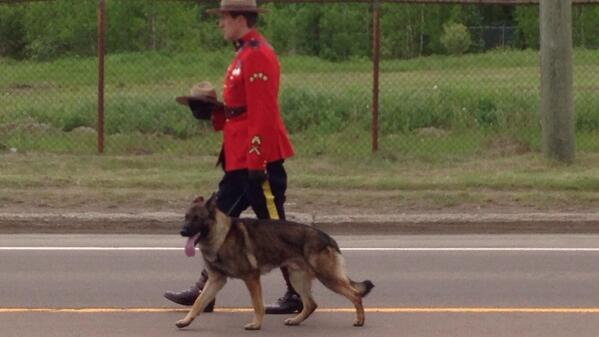 Cst. Ross's dog Danny walks behind Ross's hearse #Moncton. RT @sdpuddicombe: #moncton #cbc  http://t.co/TA2XDarTwa