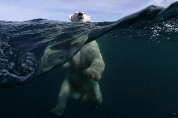 The photographer spent 3 days in a small boat near the North Pole for this shot. http://t.co/tpCXNQWome