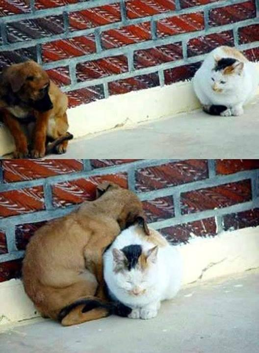 You can complete the fear of loneliness, the animals can give us many ways to teach us to live with love. http://t.co/eArGNhe8xN