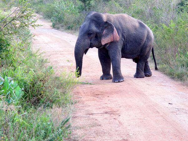 This fella is the first dwarf elephant ever recorded. We think he's pretty cool. http://t.co/voOHyZJ1kq #ttot http://t.co/JjjJGErnOY