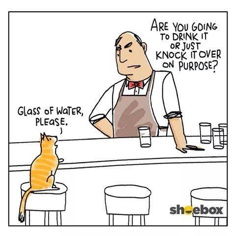 Glass of water please... #Cat http://t.co/sTHmJeON9u