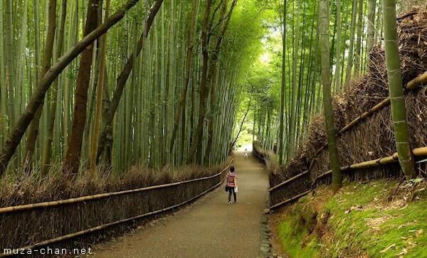 Bamboo groves, Arashiyama, #Kyoto http://t.co/GTwNMLyL5H #Japan http://t.co/j2r6ff6jHW