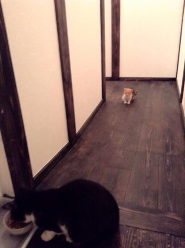 """""""@nyabema_: こないだ拾った姉ちゃんちの猫画像が送られてきたw先住民(オス)が怖いらしく2匹のチビが遠くから様子見てるw ちっさすぎて見にくいけど後ろに1匹隠れてるのがうける( ´ ▽ ` ) http://t.co/wud2UkUqes""""  かわいいー"""